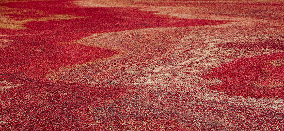 By putting all of the cranberries
